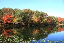 Green Belt Staten Island
