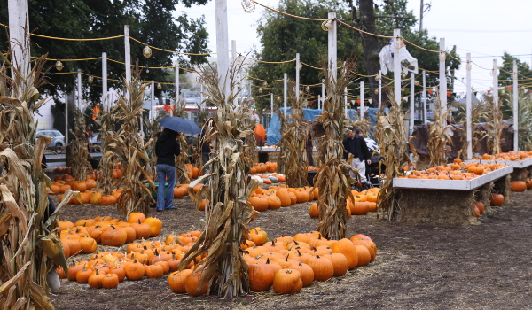 Clancy's pumpkin patch_600x350-2