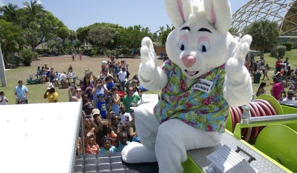 Easter bunny palooza. Photo Seaquarium