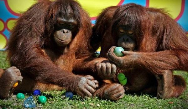 Easter. Photo Jungle Island