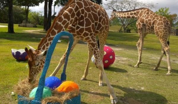 Easter. Photo Zoo Miami