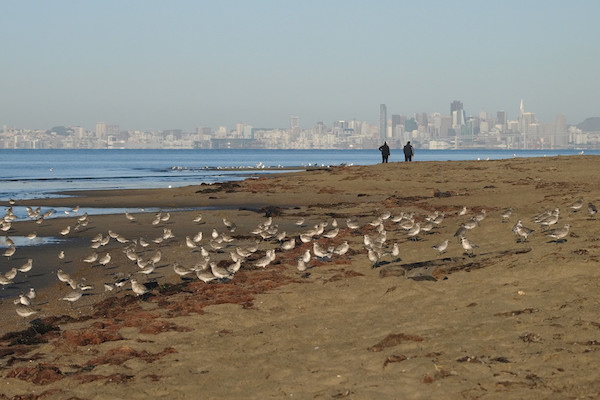 Crown Memorial State Beach