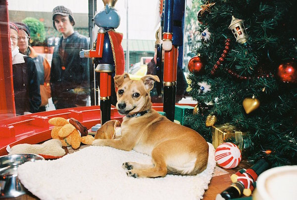 Les animaux à adopter dans les vitrines de Macy's. (Crédit: SF Funcheap)