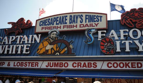 brancher Chesapeake