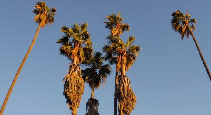 services de rencontres dans le désert de palme Comment démarrer votre propre société de rencontres